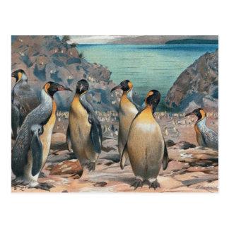 Vintage Penguin Herd Postcard