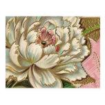 Vintage Peony Flower Postcard