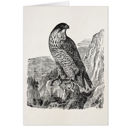 6d6128064f66f Vintage Peregrine Falcon Personalized Retro Birds
