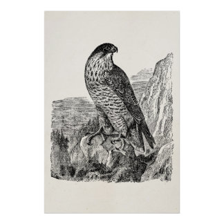Vintage Peregrine Falcon Personalized Retro Birds Poster