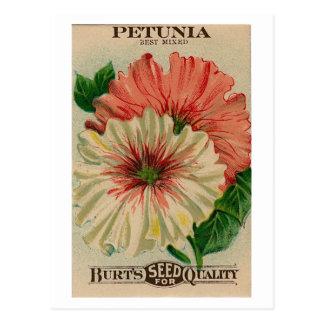 vintage petunia seed packet postcard