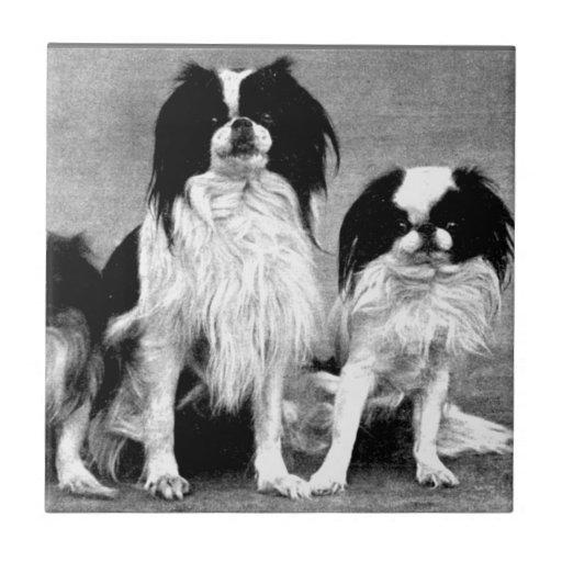 Vintage Photo Dog Lovers  Ceramic Tiles