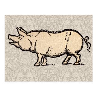 Vintage Pig Antique Piggy Illustration Postcard
