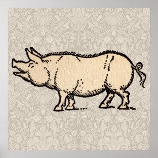 Vintage Pig Antique Piggy Illustration Poster