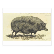 Vintage pig etching with text card