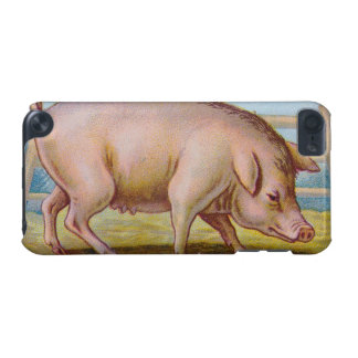 Vintage Pig Illustration iPod Touch (5th Generation) Case