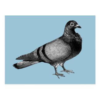 Vintage Pigeon gifts Postcard