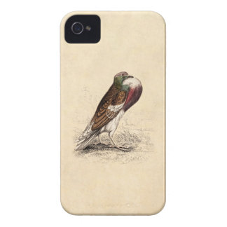 Vintage Pigeon Illustration - 1800's Bird Template Case-Mate iPhone 4 Case