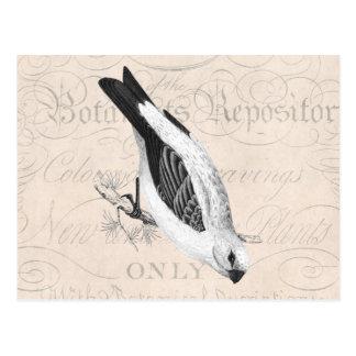 Vintage Pine Grossbeak Song Bird Illustration Postcard
