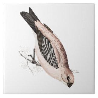 Vintage Pine Grossbeak Song Bird Illustration Tile