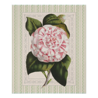 Vintage Pink and White Camellia Shabby Elegance Print