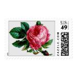 Vintage Pink Cabbage Rose - Stamp