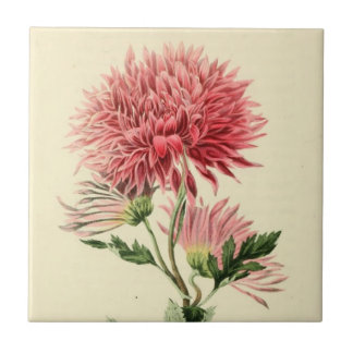 Vintage Pink Chrysanthemum Flower Tiles