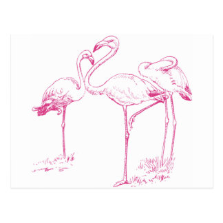 Vintage  Pink Flamingo Drawing Post Cards