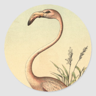 Vintage Pink Flamingo Illustration Classic Round Sticker