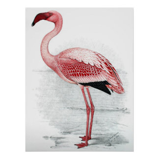 Vintage Pink Flamingo Painting Posters