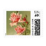 Vintage Pink Garden Roses for Valentine's Day Postage Stamp