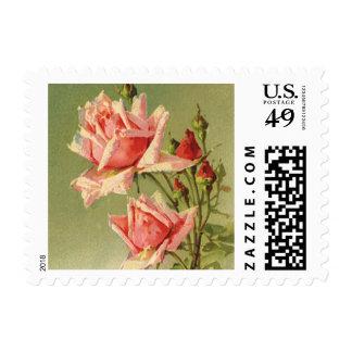 Vintage Pink Garden Roses for Valentine's Day Postage Stamps