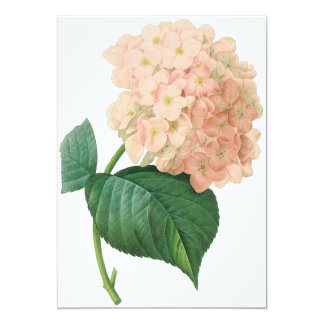 Vintage Pink Hydrangea Hortensia Flower by Redoute Card