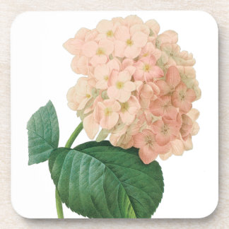 Vintage Pink Hydrangea Hortensia Flower by Redoute Drink Coaster