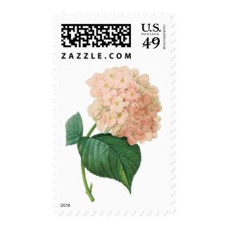 Vintage Pink Hydrangea Hortensia Flower by Redoute Postage