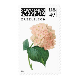 Vintage Pink Hydrangea Hortensia Flower by Redoute Postage Stamp