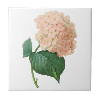 Vintage Pink Hydrangea Hortensia Flower by Redoute Ceramic Tiles