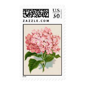 Vintage Pink Hydrangea Postage Stamps