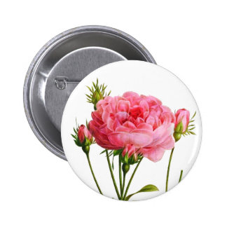 Vintage Pink Rose - Botanical Art Pinback Button