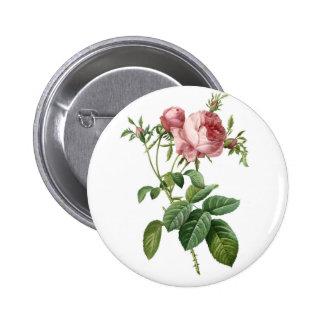 Vintage pink rose botanical illustration, Redoute Button