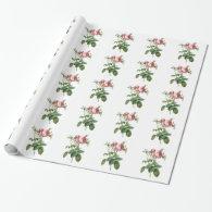Vintage pink rose botanical illustration, Redoute Gift Wrap