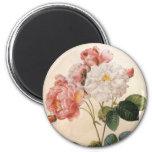 Vintage Pink Rose Magnet