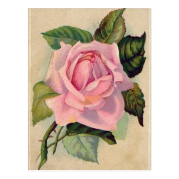 Rainbows4all Vintage Pink Rose Postcard