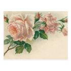 Vintage Pink Rose Postcard