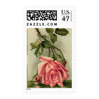 Vintage Pink Rose Upside Down in Water Postage