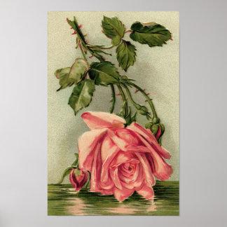 Vintage Pink Rose Upside Down in Water Poster