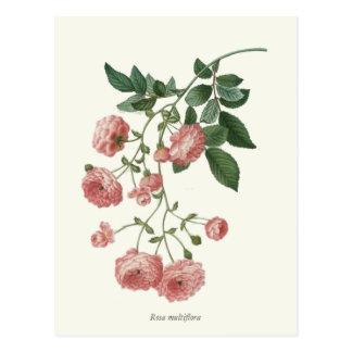 Vintage Pink Roses Botanical Print Postcards