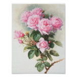 Vintage Pink Roses Painting Poster
