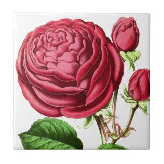 Vintage Pink Tea Rose Design Tile