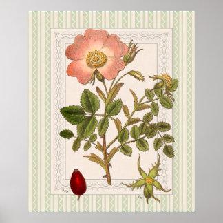 Vintage Pink Tea Rose Shabby Elegance Posters
