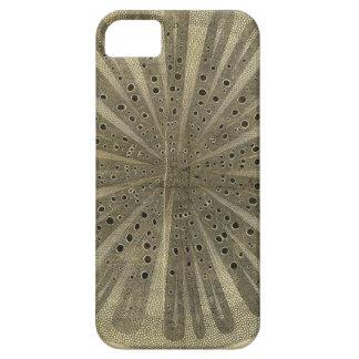 Vintage Plant Anatomy iPhone SE/5/5s Case