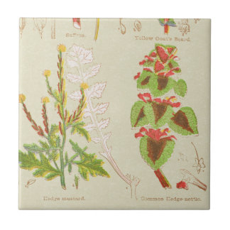 Vintage Plant Print Small Square Tile