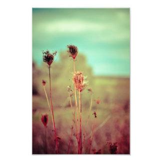 Vintage plants photo print