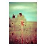 Vintage plants photographic print