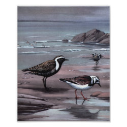 Matte Poster with Weber's Plovers & Turnstones design