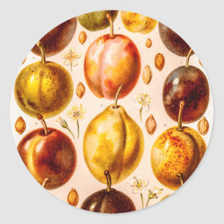 Vintage Plums Antique Plum Fruit Illustration Classic Round Sticker