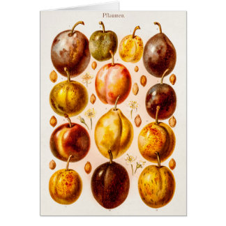 Vintage Plums Antique Plum Fruit Illustration Stationery Note Card