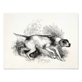 Vintage Pointer Hunting Dog 1800s Pointers Dogs Photo Print