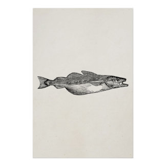 Vintage Pollack Fish - Aquatic Fishes Template Poster