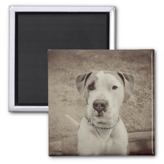 Vintage Polo 2 Inch Square Magnet